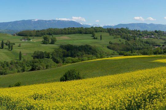 Nature et ressourcement : l'Albanais vous tend la clé des champs !