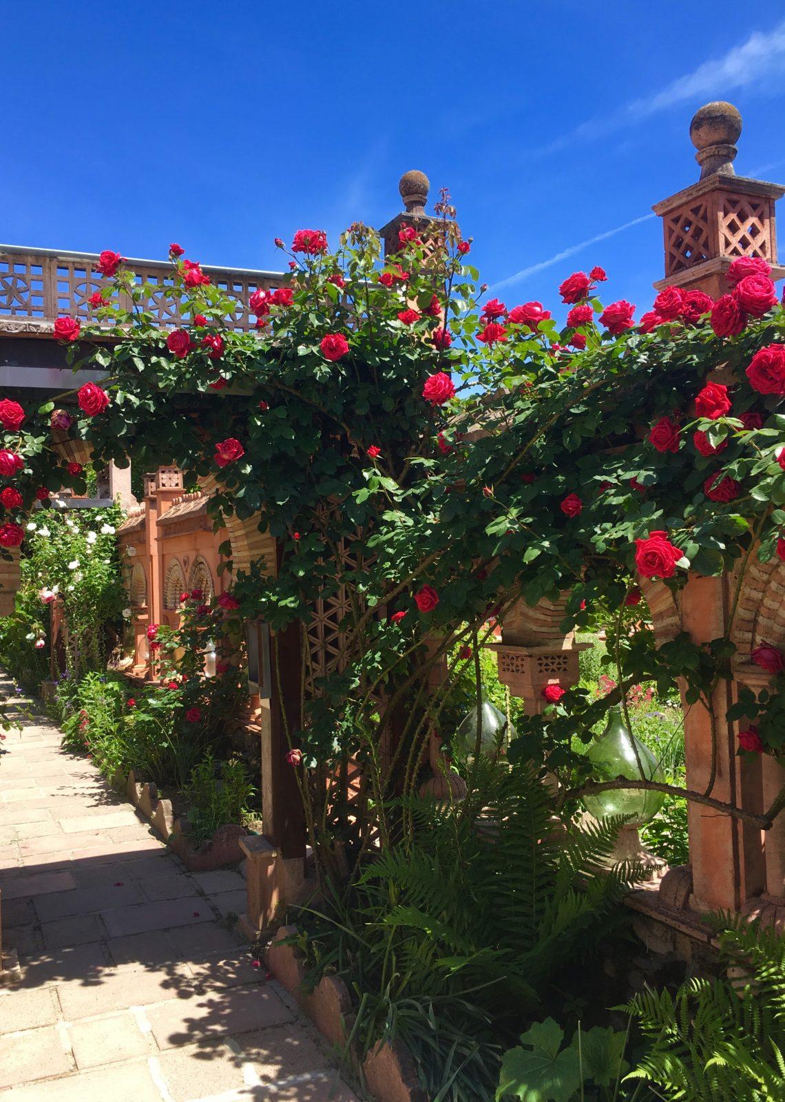 rosiers en fleurs