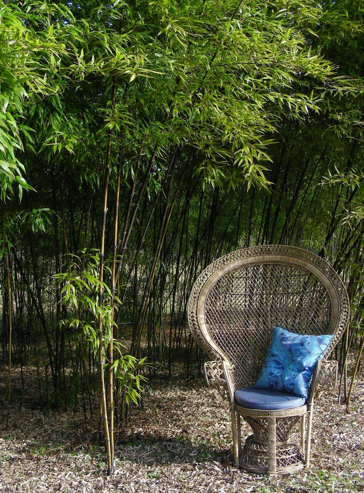 Flâneries parmi les bambous aux Jardins de Lornay